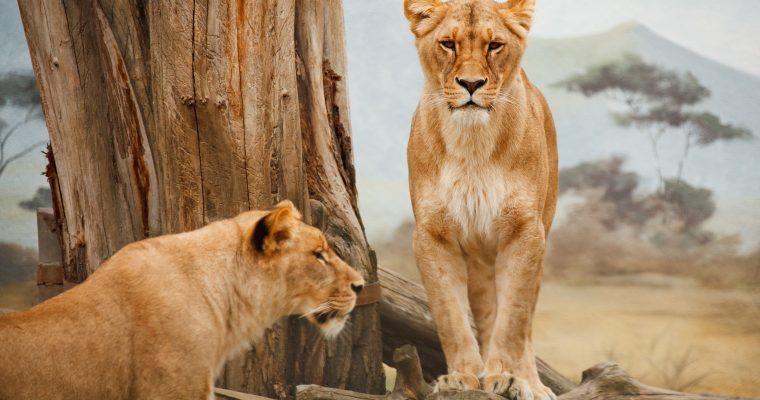 Die besten Tipps für Safari Fotografie