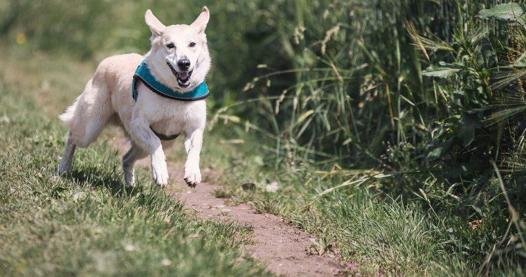 Hunde beim Rennen fotografieren