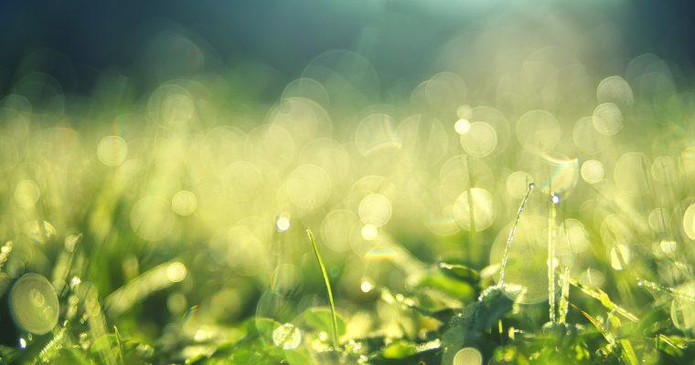 Coole Frühlingsfotos mit dem Smartphone